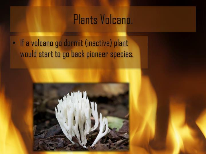 Plants Volcano.