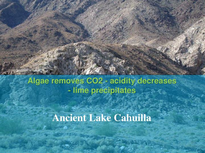 Algae removes CO2 - acidity decreases