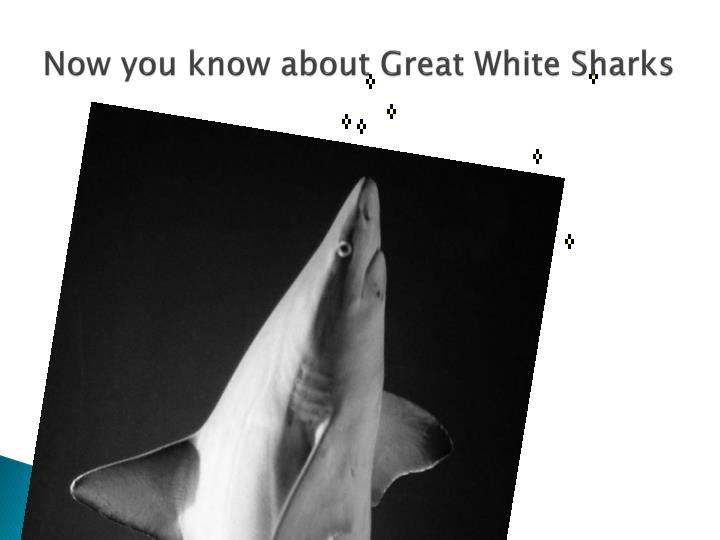 Now you know about Great White Sharks