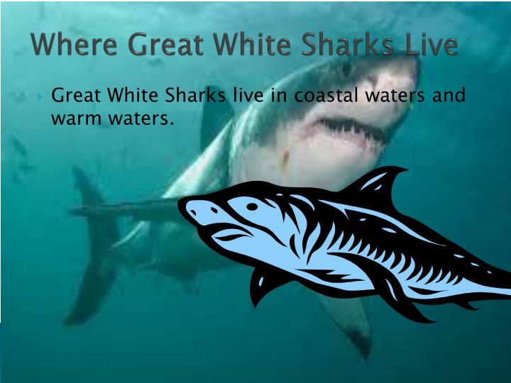 Where great white sharks live