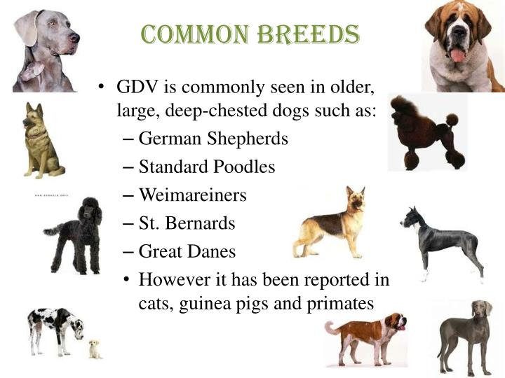 Common breeds