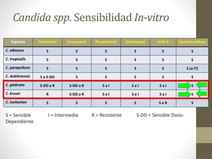 Candida spp