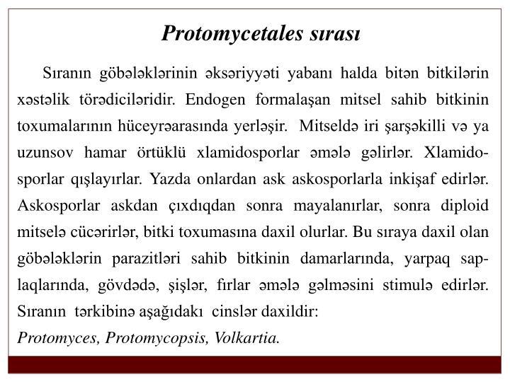 Protomycetales