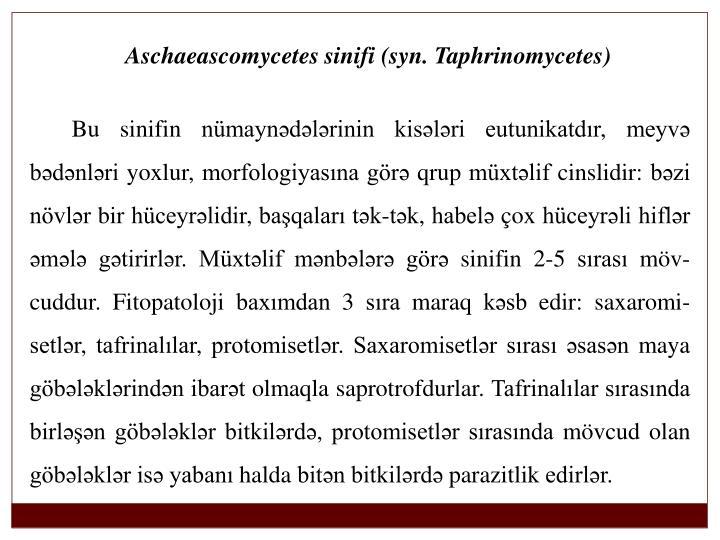 Aschaeascomycetes