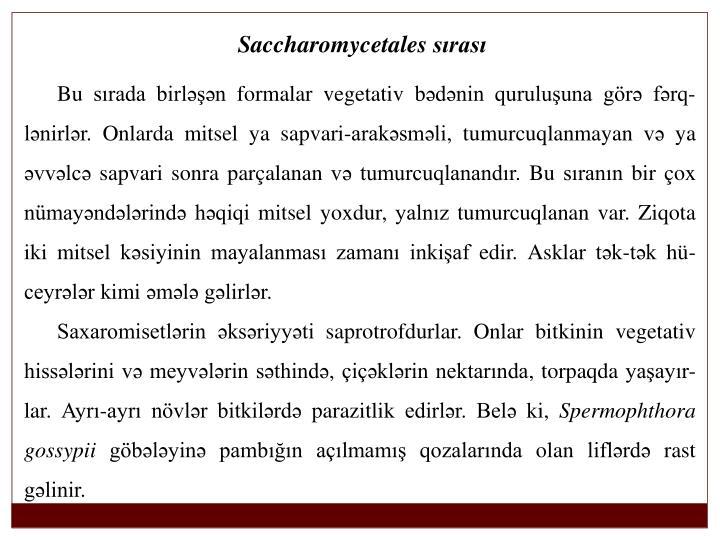 Saccharomycetales