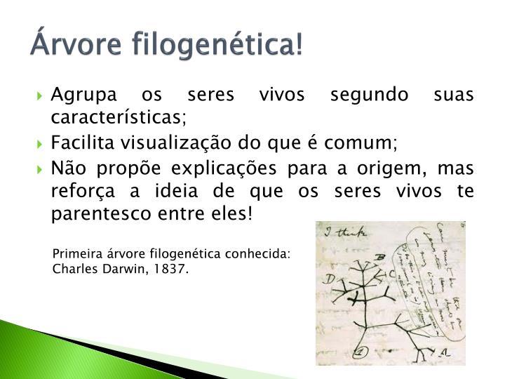 Árvore filogenética!