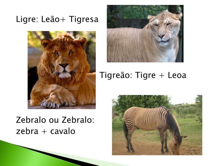Ligre