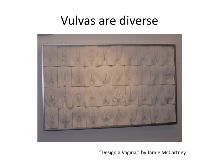 Vulvas are diverse