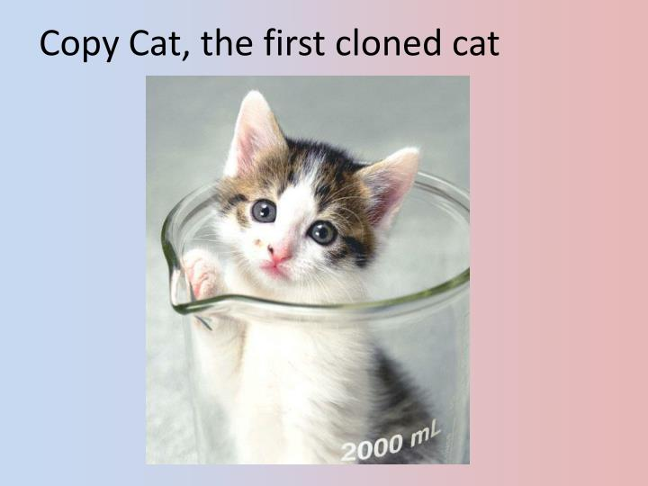 Copy Cat, the first cloned cat