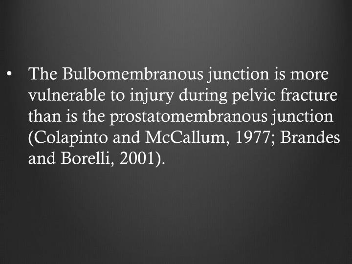 The Bulbomembranous junction is more vulnerable to injury during pelvic fracture than is the prostatomembranous junction (Colapinto and McCallum, 1977; Brandes and Borelli, 2001).