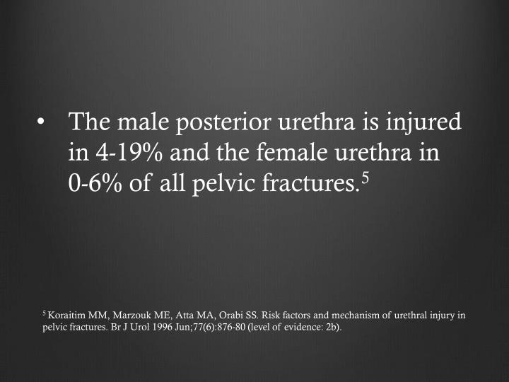 The male posterior urethra is injured in 4-19% and the female urethra in 0-6% of all pelvic fractures.