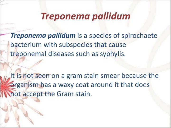 Treponema
