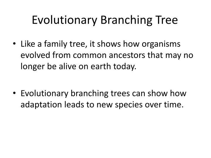 Evolutionary Branching Tree