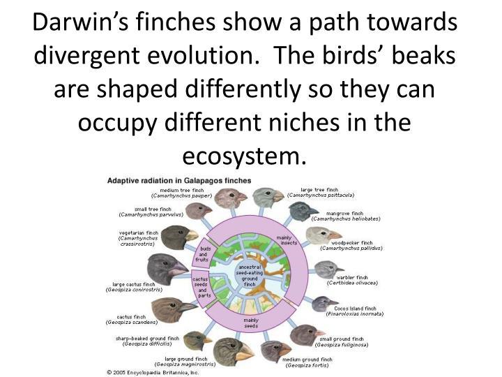 Darwin's finches show