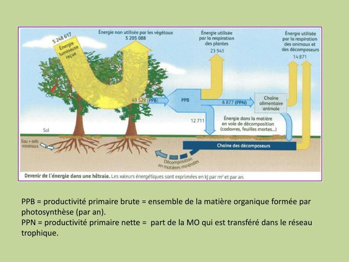 PPB = productivité primaire brute = ensemble de la matière organique formée par photosynthèse (par an).