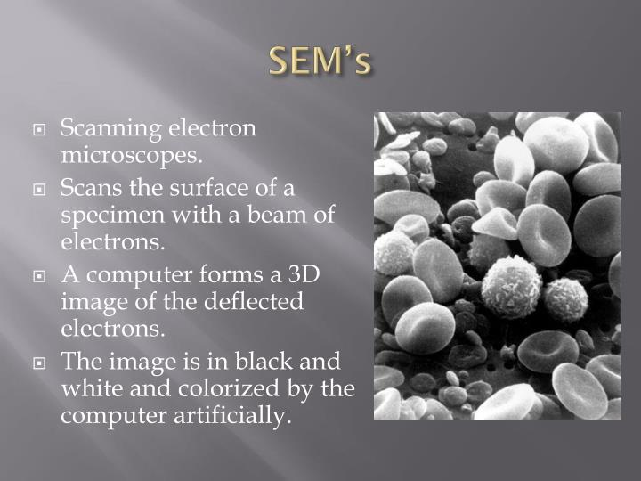 SEM's