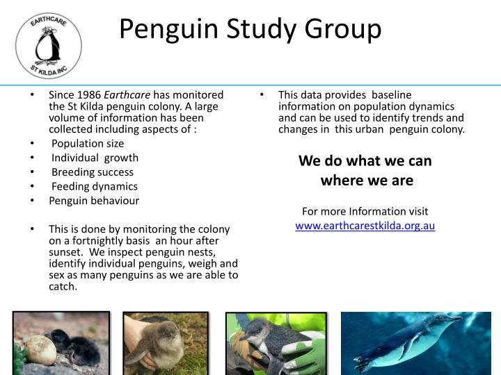 Penguin study group