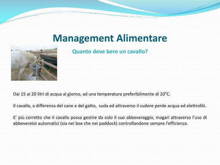 Management Alimentare
