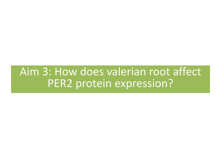 Aim 3: How does valerian root affect PER2 protein expression?