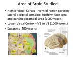 area of brain studied