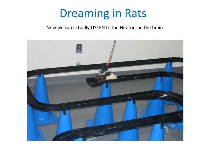 Dreaming in Rats