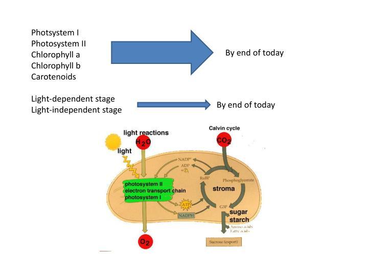 Photsystem