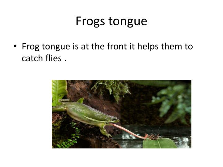 Frogs tongue
