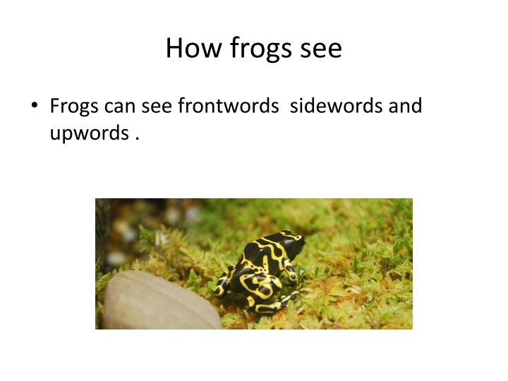 How frogs see