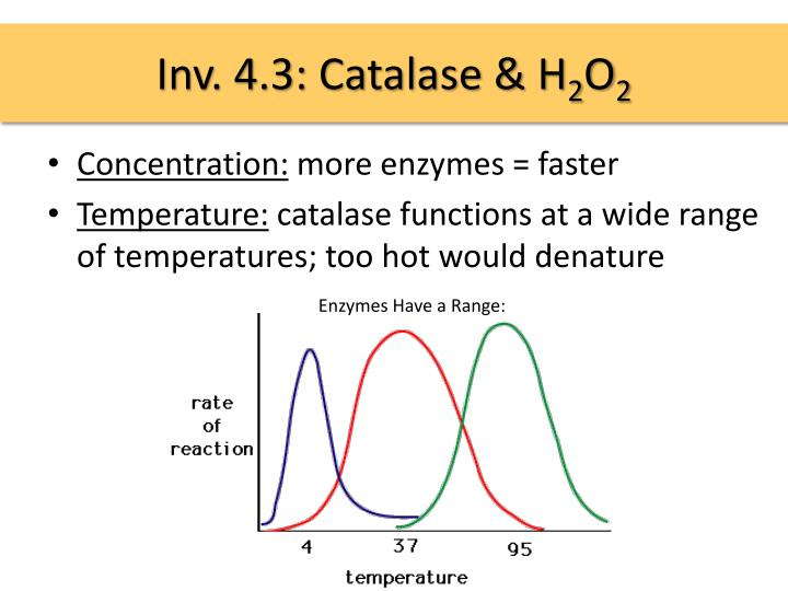 Inv. 4.3: Catalase & H