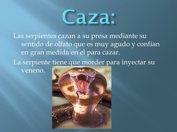 Caza: