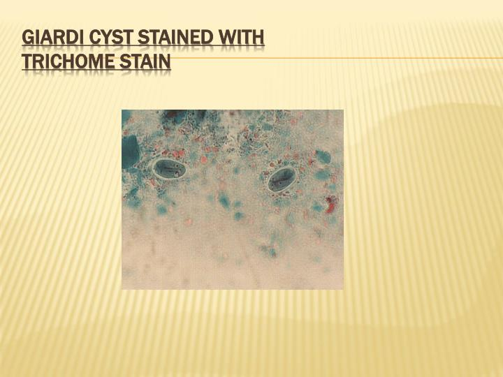 GIARDI CYST STAINED WITH
