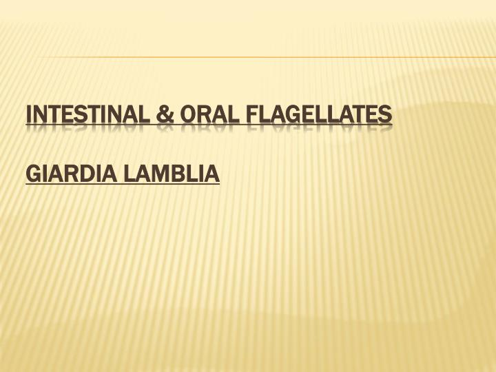 Intestinal & oral flagellates