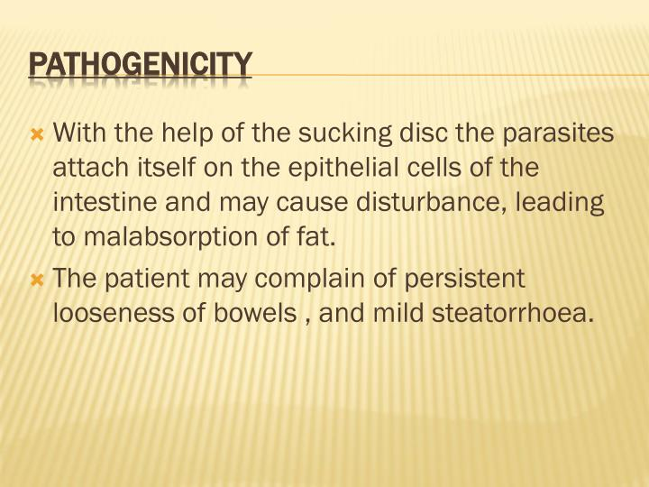 With the help of the sucking disc the parasites attach itself on the epithelial cells of the intestine and may cause disturbance, leading to malabsorption of fat.