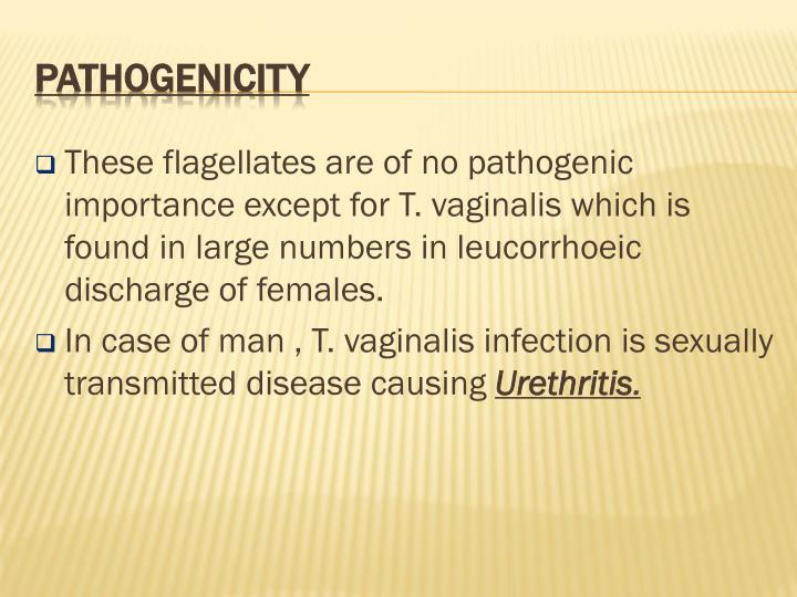 These flagellates are of no pathogenic importance except for T. vaginalis which is found in large numbers in leucorrhoeic discharge of females.