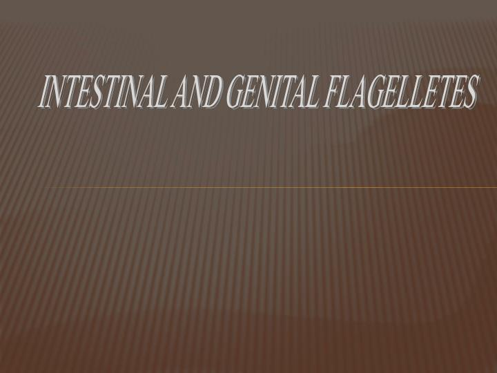 INTESTINAL AND GENITAL FLAGELLETES