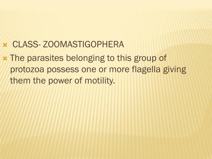 CLASS- ZOOMASTIGOPHERA