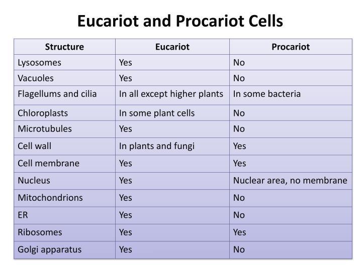 Eucariot