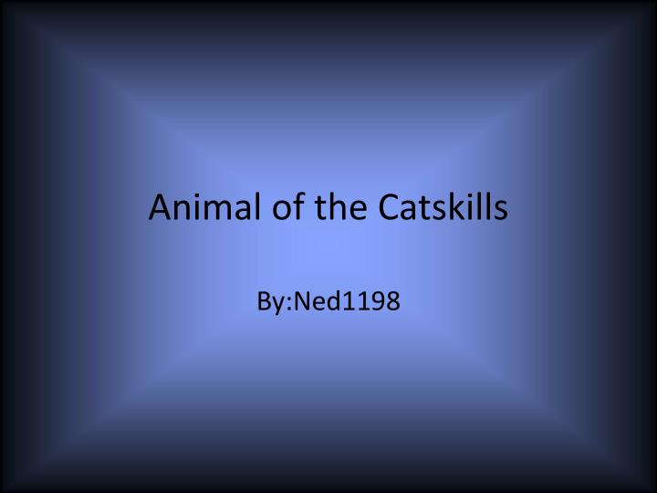 Animal of the catskills