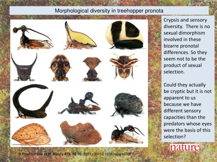 Morphological diversity in