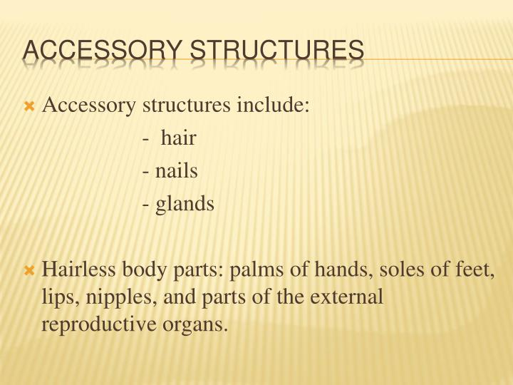 Accessory structures include: