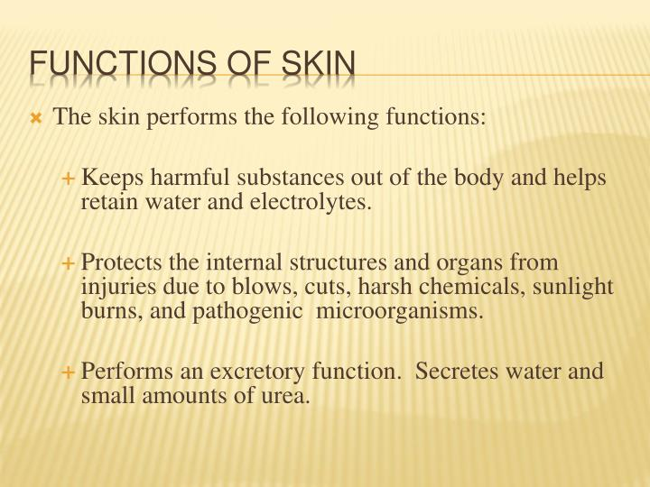The skin performs the following functions: