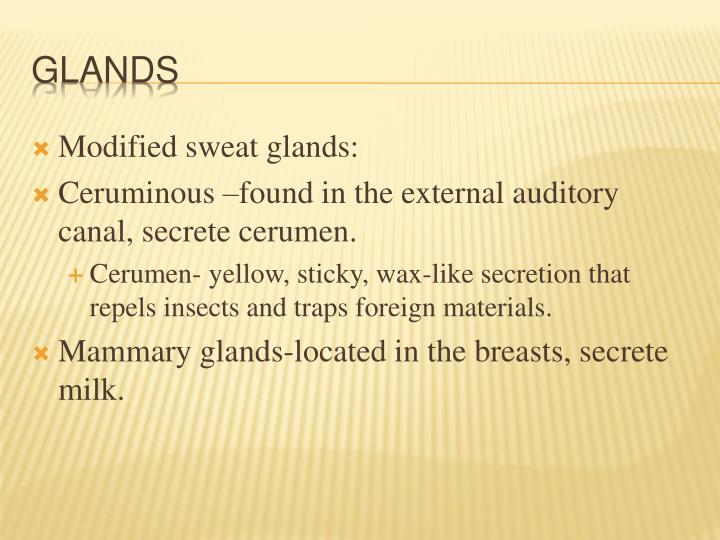 Modified sweat glands: