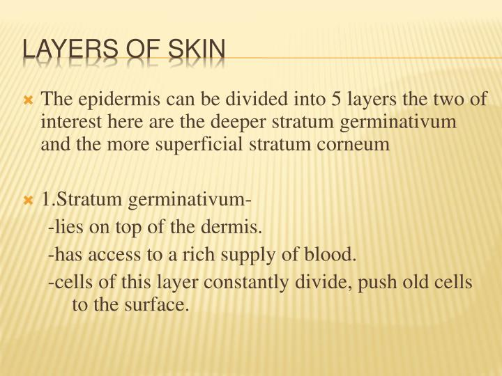 The epidermis can be divided into 5 layers the two of interest here are the deeper stratum germinativum and the more superficial stratum corneum