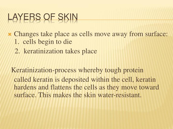 Changes take place as cells move away from surface:    1.  cells begin to die