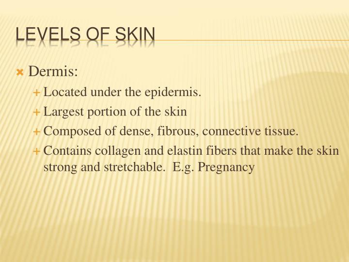 Dermis: