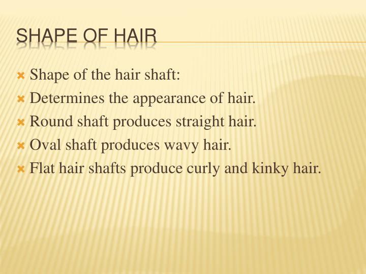 Shape of the hair shaft: