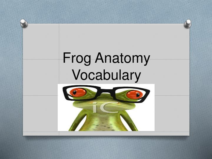 Frog anatomy vocabulary