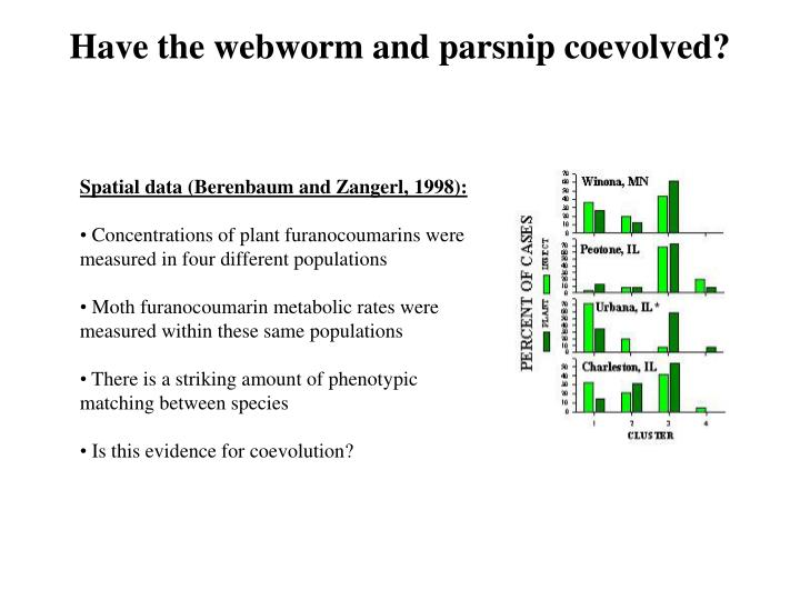 Have the webworm and parsnip coevolved?