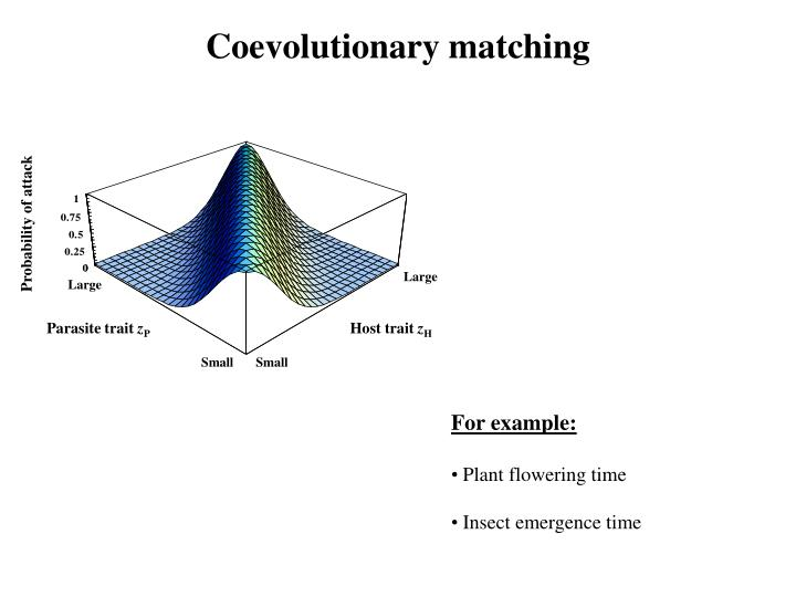 Coevolutionary matching