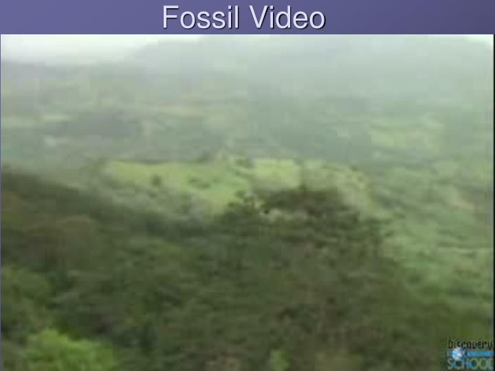 Fossil Video